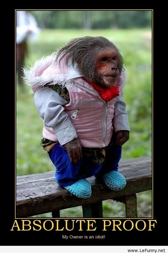 Absolute proof Dressed up monkey
