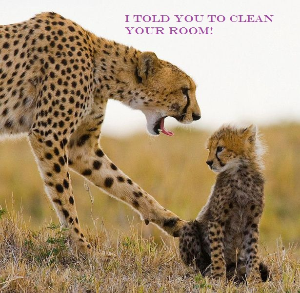 Clean your room Cheetah Clean your room!