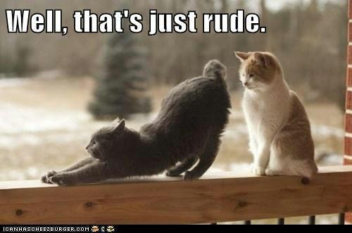 Thats Rude Cats Rude Cat!