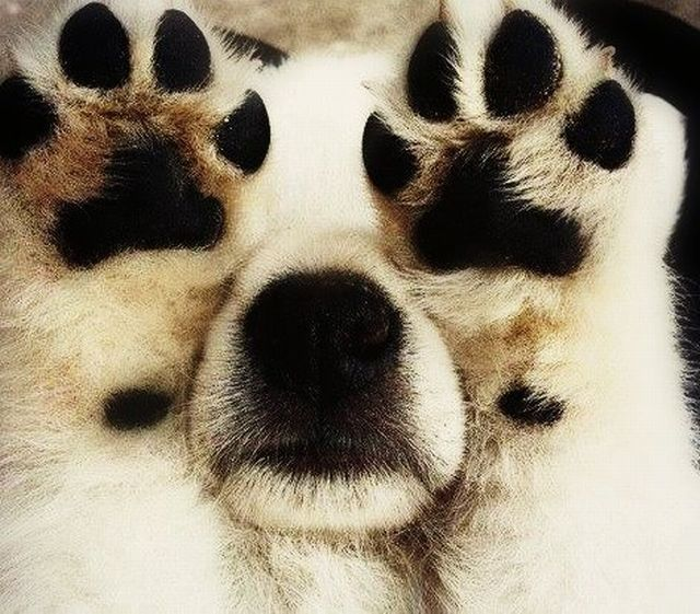 dog paws You cant see me!