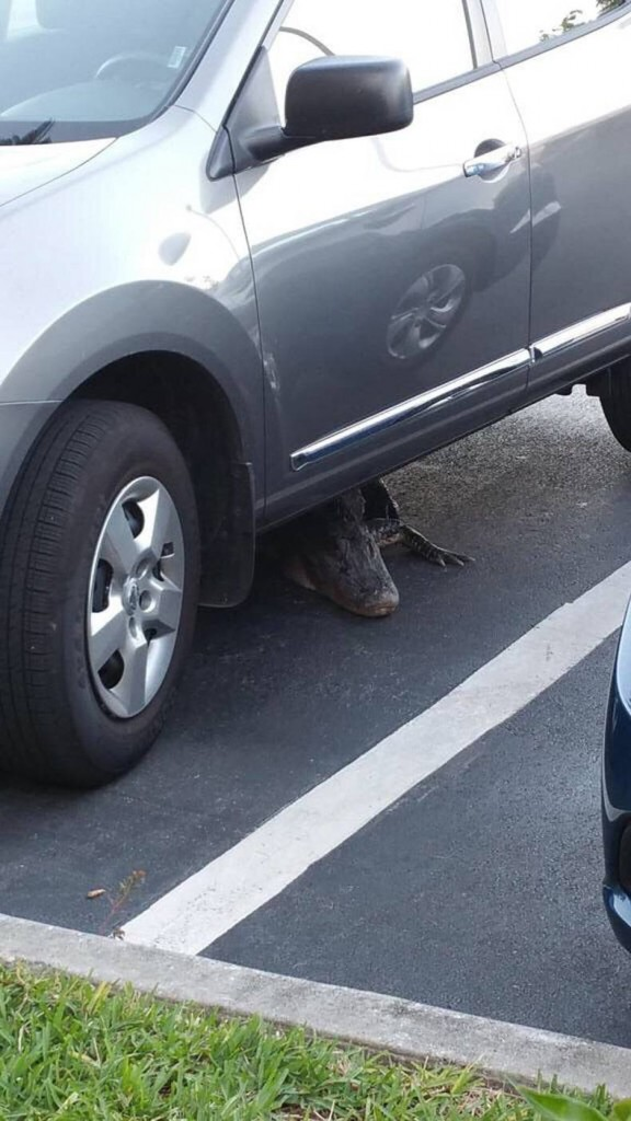 This car protected by GATOR auto alarms