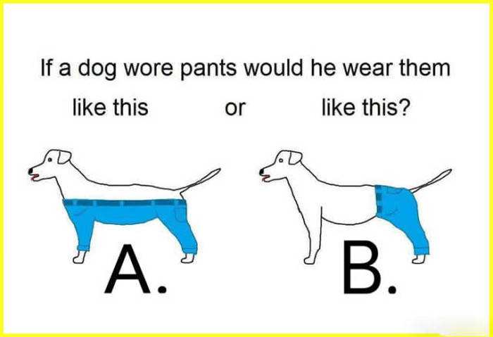 if a dog wore pants