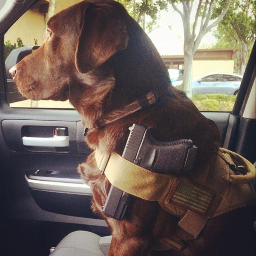 Well Armed Lab